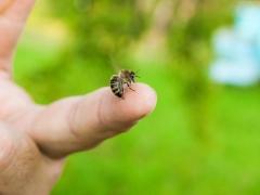bi ong chich khi nao can di cap cuu