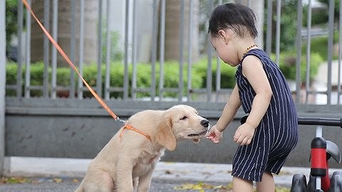 Cách ngăn ngừa chó cắn trẻ con